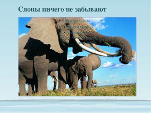 Слоны ничего не забывают