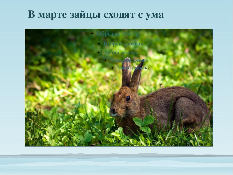 В марте зайцы сходят с ума