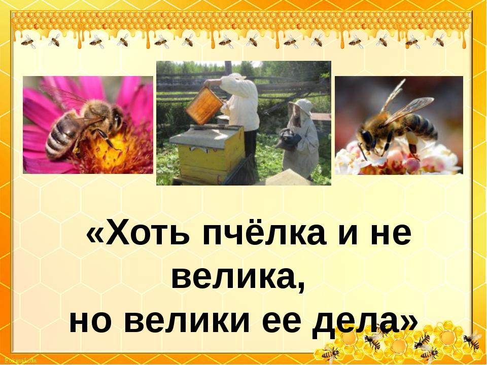 «Хоть пчёлка и не велика, но велики ее дела»