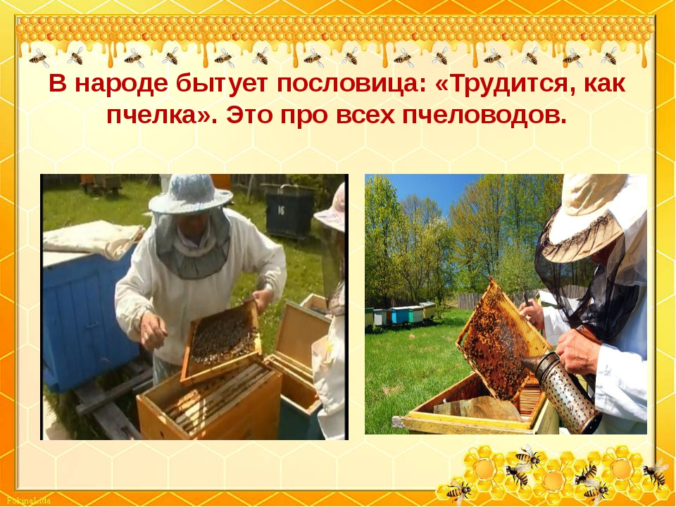 В народе бытует пословица: «Трудится, как пчелка». Это про всех пчеловодов.