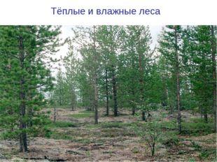 Тёплые и влажные леса