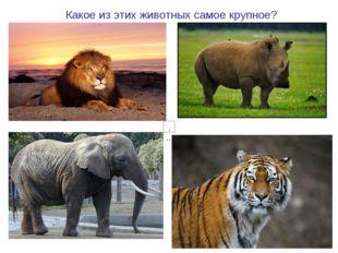 Какое из этих животных самое крупное?
