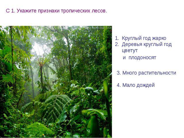 С 1. Укажите признаки тропических лесов. Круглый год жарко Деревья круглый го...