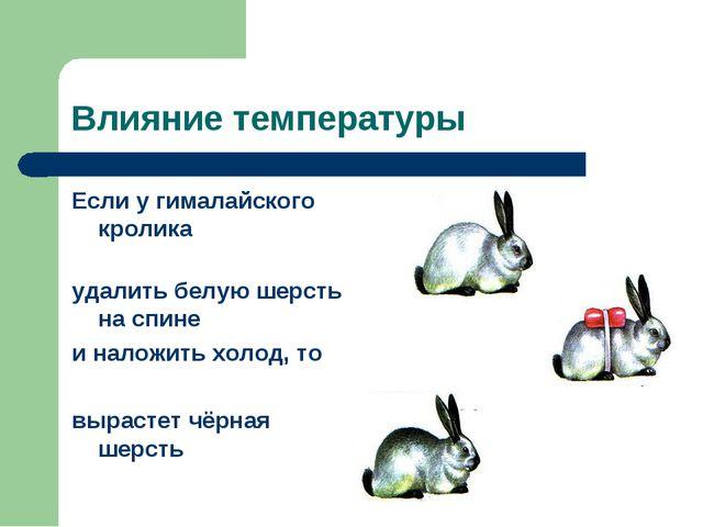 Влияние температуры Если у гималайского кролика удалить белую шерсть на спине...