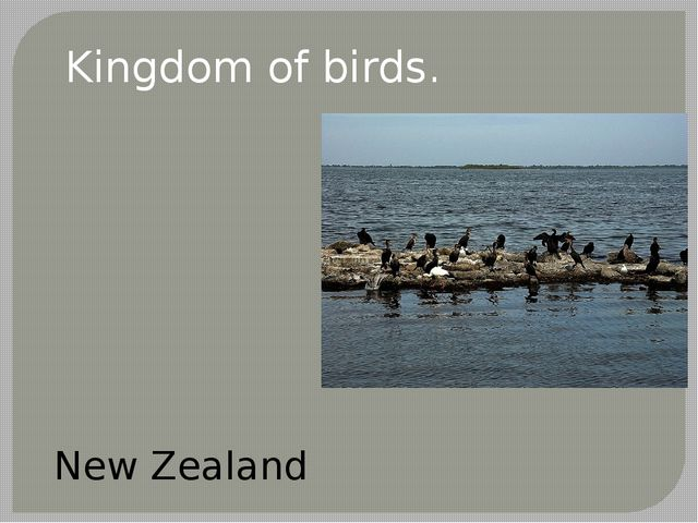 Kingdom of birds. New Zealand
