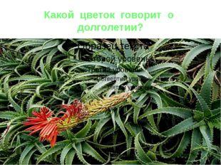 Какой цветок говорит о долголетии?