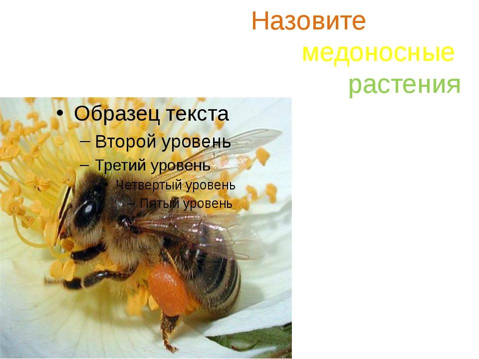 Назовите медоносные растения