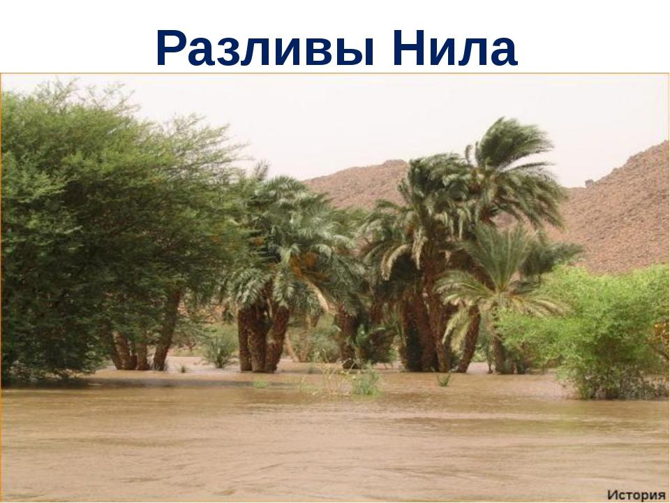 Разливы Нила