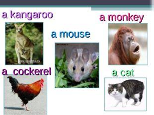a kangaroo a mouse a monkey a cockerel a cat
