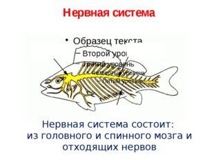 Нервная система Нервная система состоит: из головного и спинного мозга и отх