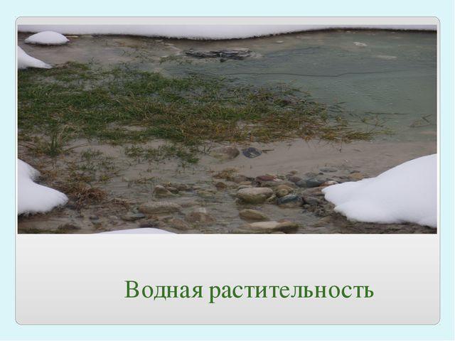 Водная растительность