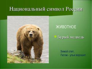 Национальный символ России Бурый медведь ЖИВОТНОЕ Зимой спит, Летом - ульи во