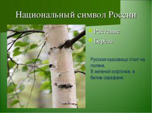 Национальный символ России Растение Берёза Русская красавица стоит на поляне,