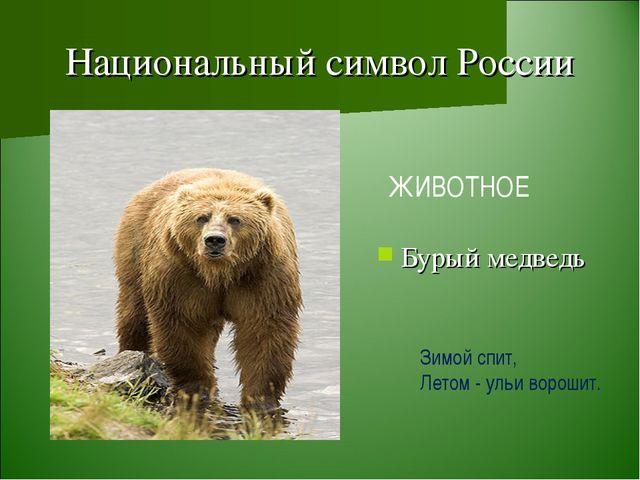 Национальный символ России Бурый медведь ЖИВОТНОЕ Зимой спит, Летом - ульи во...