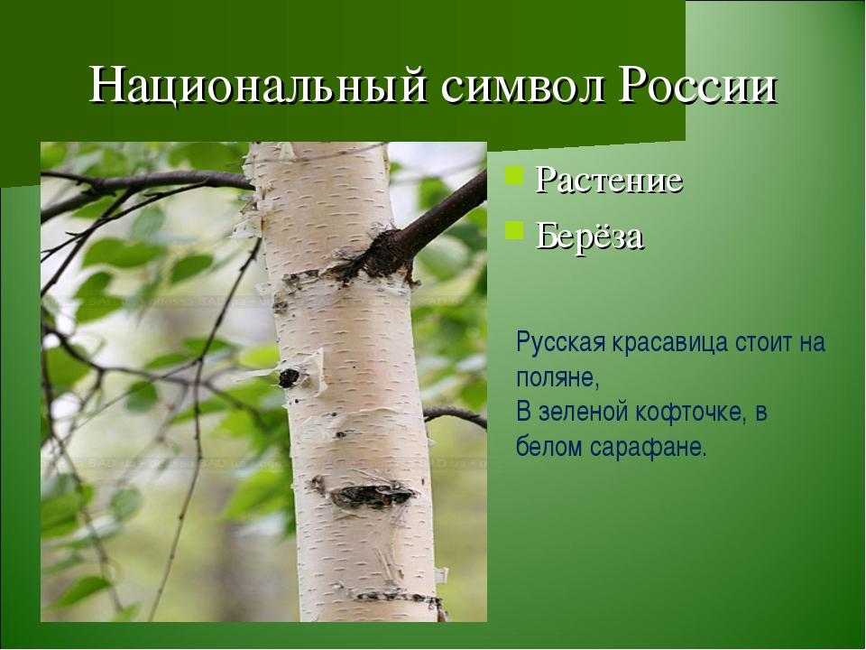 Национальный символ России Растение Берёза Русская красавица стоит на поляне,...