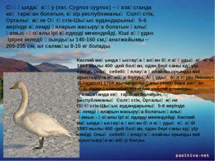 Сұңқылдақ аққу (лат. Cygnus cygnus) – Қазақстанда кең тараған болатын, кәзір