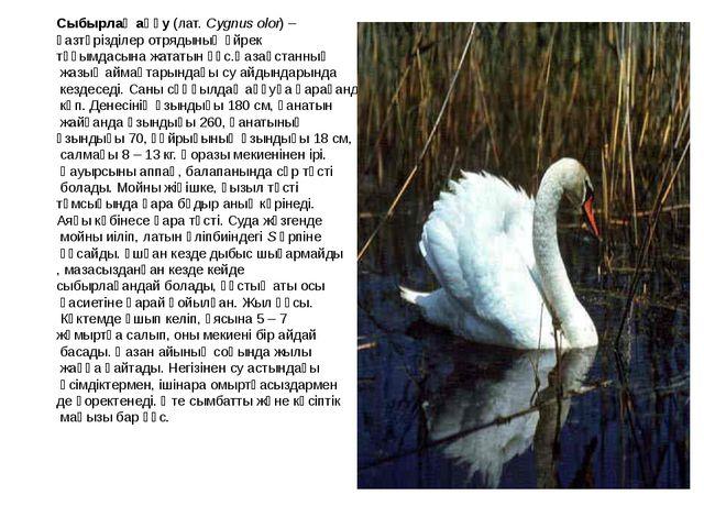 Сыбырлақ аққу (лат. Cygnus olor) – қазтәрізділер отрядының үйрек тұқымдасына...