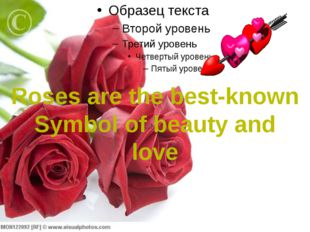 Roses are the best-known Symbol of beauty and love