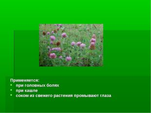 Применяется: при головных болях при кашле соком из свежего растения промывают