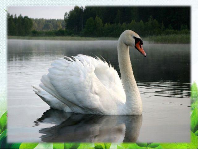 Длинношеяя та птица, Грациозна, как царица. Гладью водной проплывает, Чудно ш...