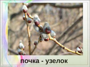 почка - узелок
