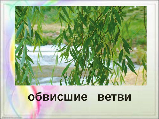 обвисшие ветви