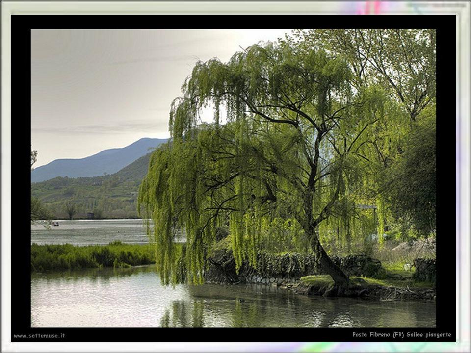 Гибкий стан согнула, Голову склонила, Ветви окунула В воду речки…