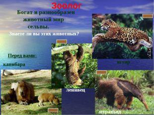 капибара Перед вами: Богат и разнообразен животный мир сельвы. ягуар Знаете л