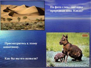 На фото слева ещё одна природная зона. Какая? Присмотритесь к этому животном