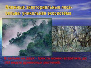 Влажные экваториальные леса-сельва- уникальная экосистема В сельве на двух -