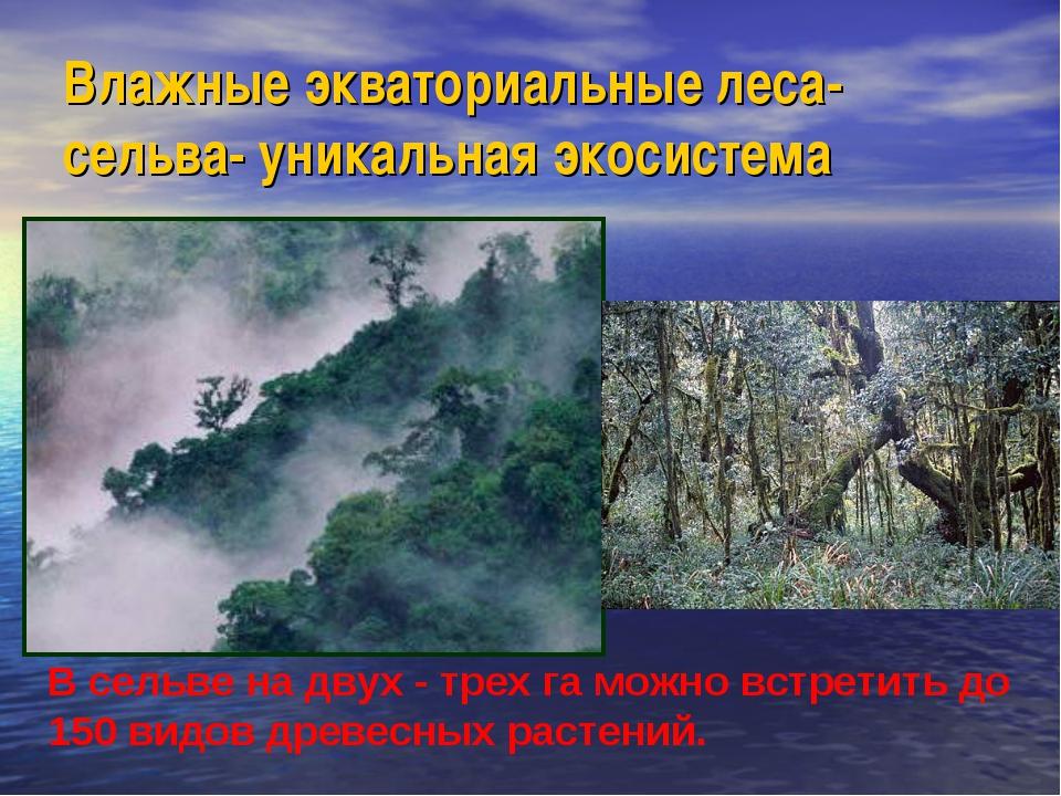 Влажные экваториальные леса-сельва- уникальная экосистема В сельве на двух -...