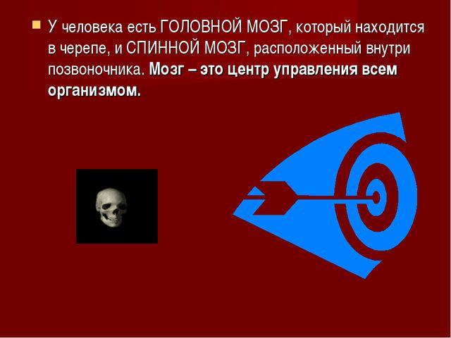 У человека есть ГОЛОВНОЙ МОЗГ, который находится в черепе, и СПИННОЙ МОЗГ, ра...