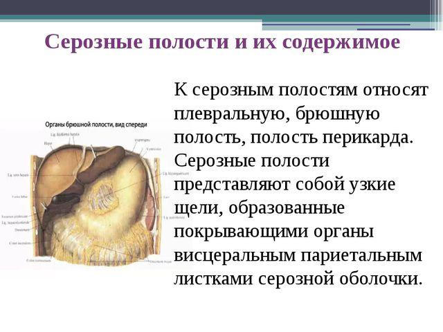 К серозным полостям относят плевральную, брюшную полость, полость перикарда....