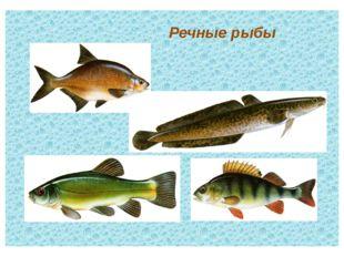 Речные рыбы текст