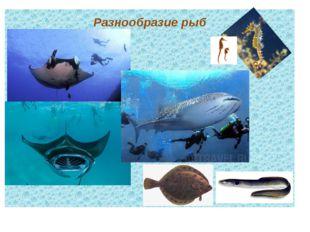 Разнообразие рыб текст