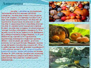 Аннотация Асқабақ—асқабақтар тұқымдасына жататын бір және көп жылдық шөп