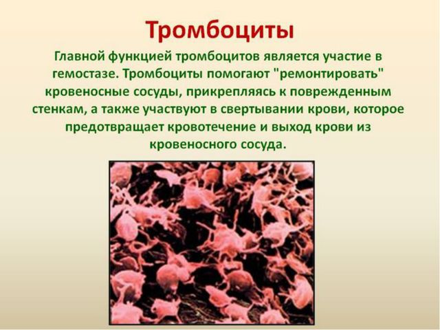 Совместное открытие знаний Кровяные пластинки, или тромбоциты