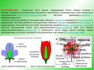 Околоцветник— стерильная часть цветка, защищающая более нежные тычинки и пес