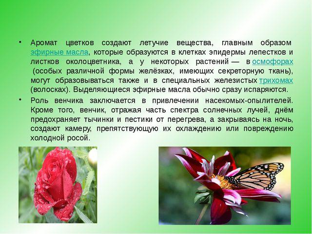 Аромат цветков создают летучие вещества, главным образомэфирные масла, кото...