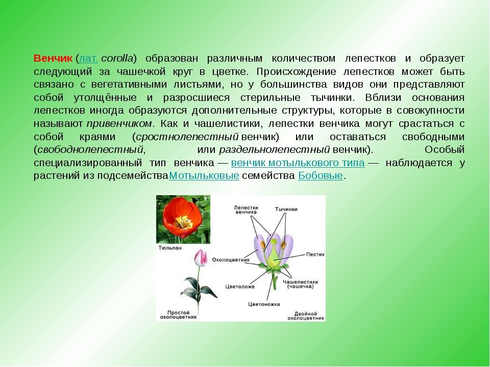 Венчик(лат.corolla) образован различным количеством лепестков и образует сл...