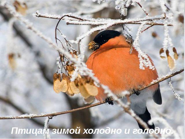 Птицам зимой холодно и голодно.