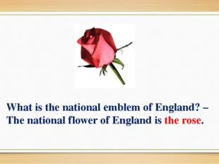 What is the national emblem of England? – The national flower of England is t