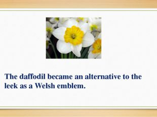 The daffodil became an alternative to the leek as a Welsh emblem.
