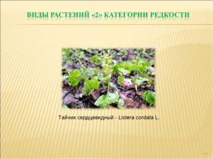 * Тайник сердцевидный - Listera cordata L.