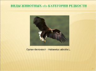 * Орлан-белохвост - Haliaeetus albicilla L.