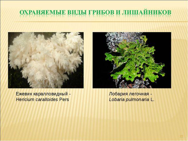 * Ежевик каралловидный - Hericium caralloides Pers Лобария легочная - Lobaria...