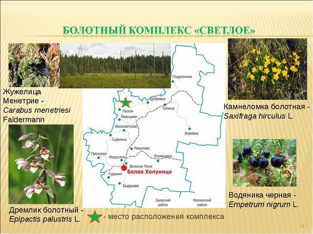 - место расположения комплекса * Дремлик болотный - Epipactis palustris L. Ж...