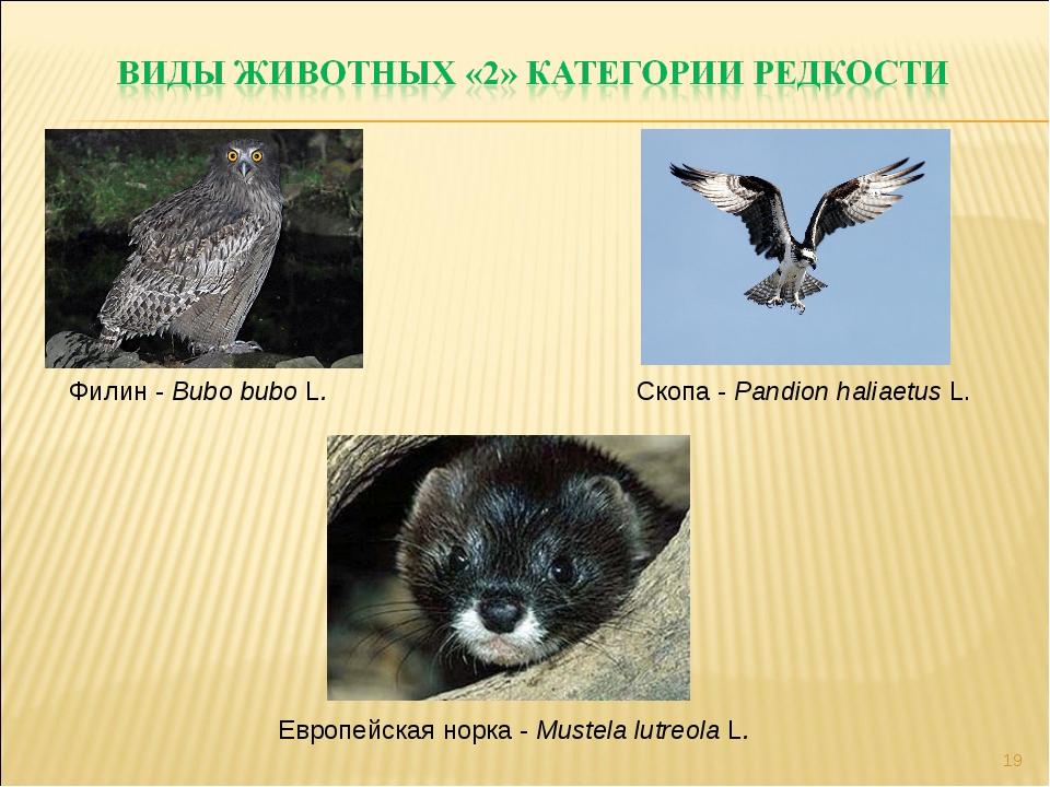 * Филин - Bubo bubo L. Скопа - Pandion haliaetus L. Европейская норка - Muste...