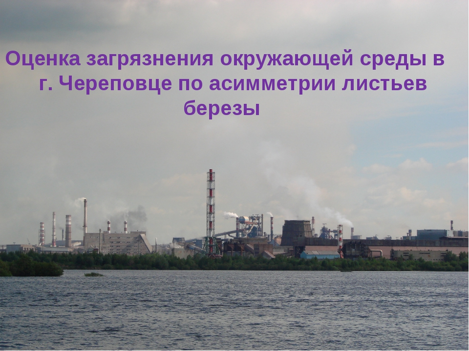 Оценка загрязнения окружающей среды в г. Череповце по асимметрии листьев бер...