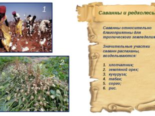 Саванны относительно благоприятны для тропического земледелия. Значительные у